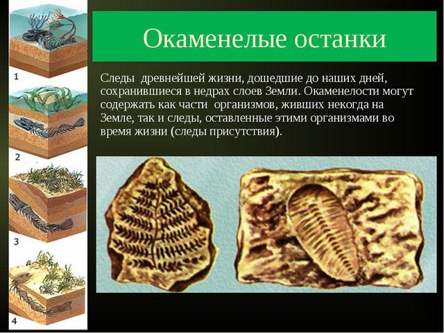 Окаменелые останки Следы древнейшей жизни, дошедшие до наших дней, сохранивши...