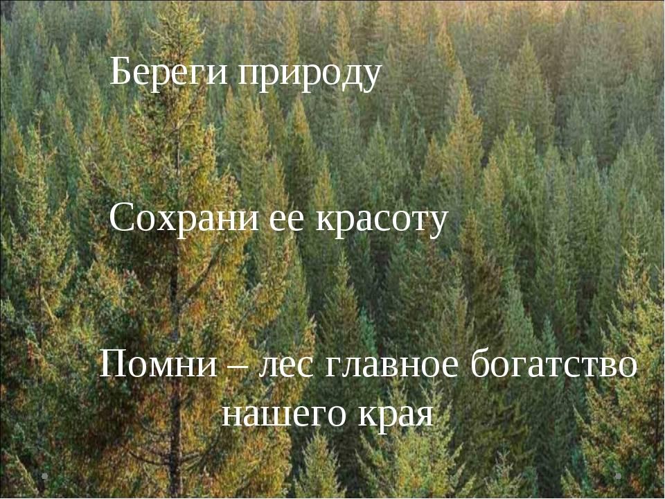 Береги природу Сохрани ее красоту Помни – лес главное богатство нашего края