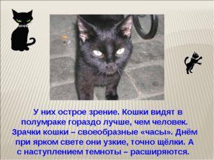 У них острое зрение. Кошки видят в полумраке гораздо лучше, чем человек. Зра