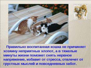 Правильно воспитанная кошка не причиняет хозяину неприятных хлопот, а в тяже