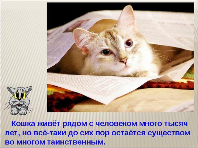 Кошка живёт рядом с человеком много тысяч лет, но всё-таки до сих пор остаёт...