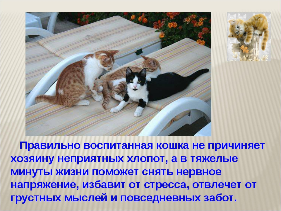 Правильно воспитанная кошка не причиняет хозяину неприятных хлопот, а в тяже...