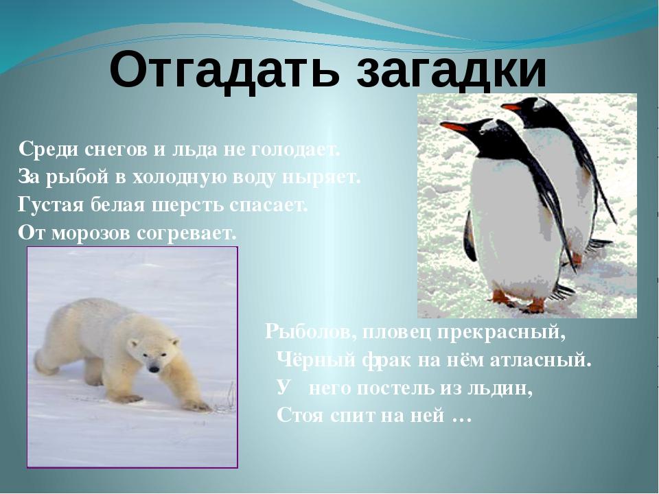 Отгадать загадки Среди снегов и льда не голодает. За рыбой в холодную воду ны...