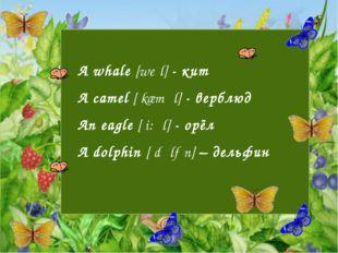 A whale [weɪl] - кит A camel [ˈkæməl] - верблюд An eagle [ˈi:ɡl] - орёл A do