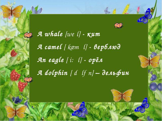 A whale [weɪl] - кит A camel [ˈkæməl] - верблюд An eagle [ˈi:ɡl] - орёл A do...