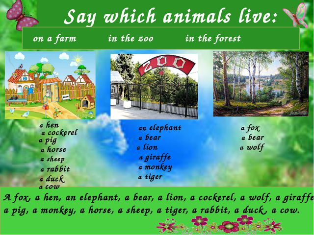 Say which animals live: A fox, a hen, an elephant, a bear, a lion, a cockere...