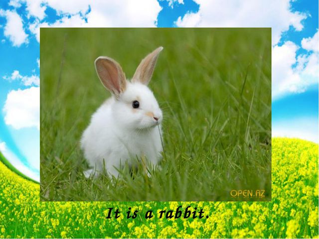 It is a rabbit.