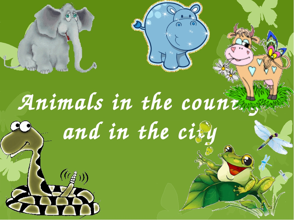 Animals in the country and in the city