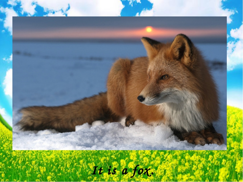 It is a fox.