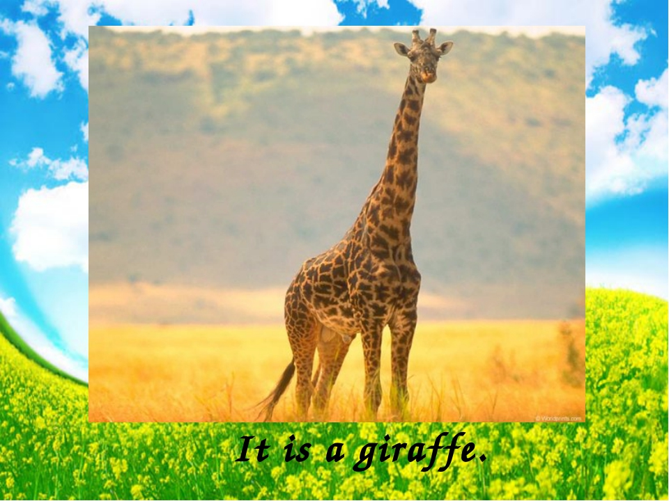 It is a giraffe.