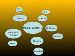 Мидың салмағы Жаңа туған балада 400гр 2 жаста 2 есе үлкен 6 жаста 1 кг 20-30