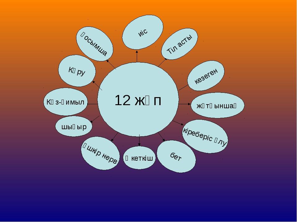12 жұп иіс Тіл асты кезеген жұтқыншақ кіреберіс ұлу бет Әкеткіш Үшкір нерв шы...