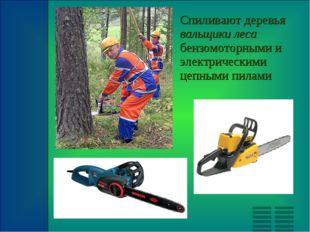 Спиливают деревья вальщики леса бензомоторными и электрическими цепными пилами
