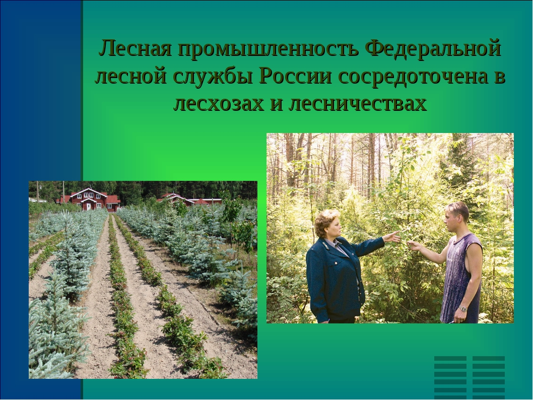 Лесная промышленность Федеральной лесной службы России сосредоточена в лесхоз...