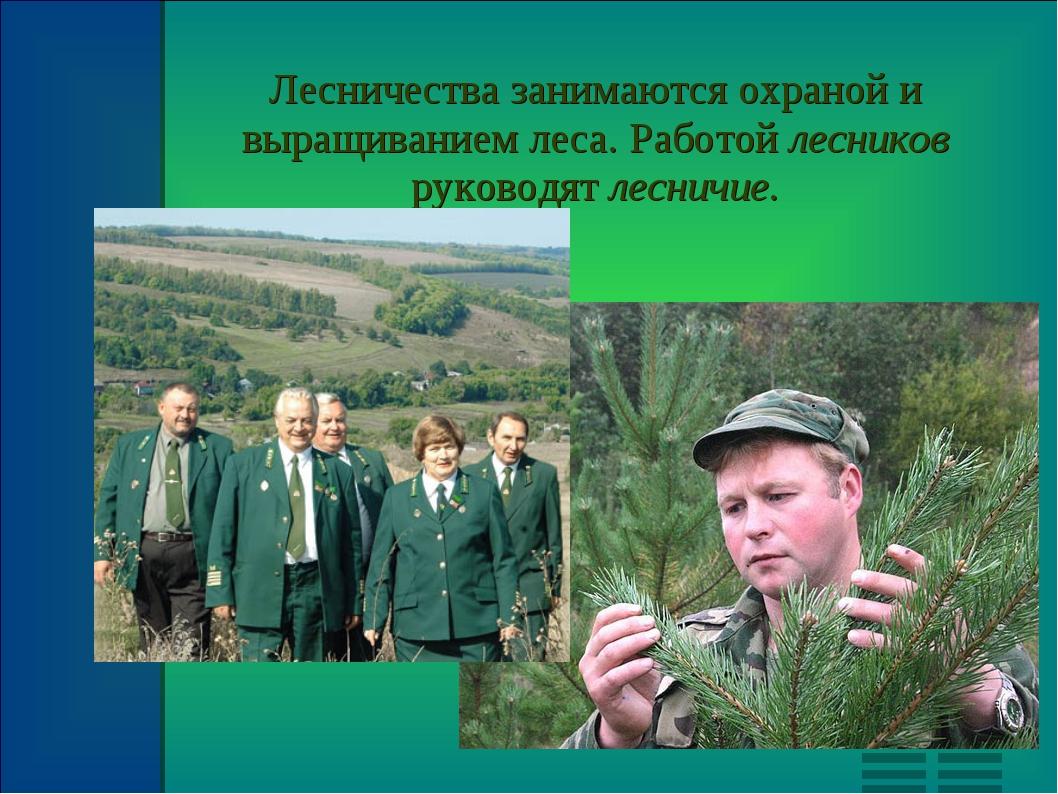 Лесничества занимаются охраной и выращиванием леса. Работой лесников руководя...