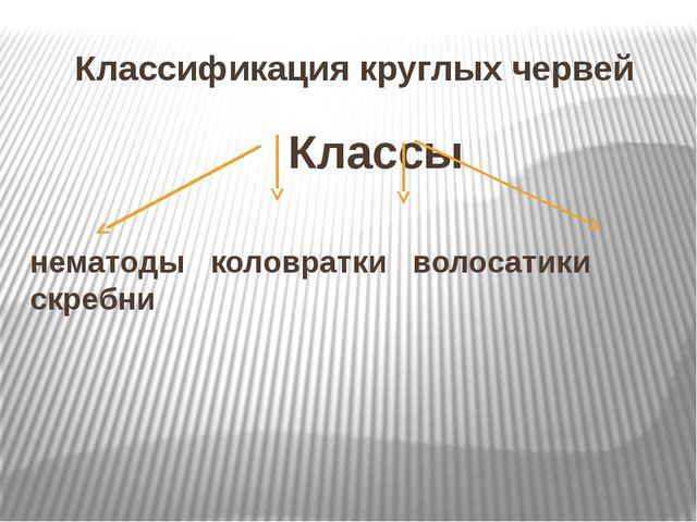 Классификация круглых червей Классы нематоды коловратки волосатики скребни