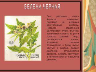 Все растение очень ядовито, оказывает действие на нервную вегетативную систем