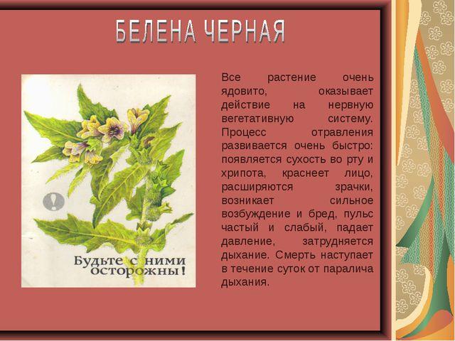 Все растение очень ядовито, оказывает действие на нервную вегетативную систем...