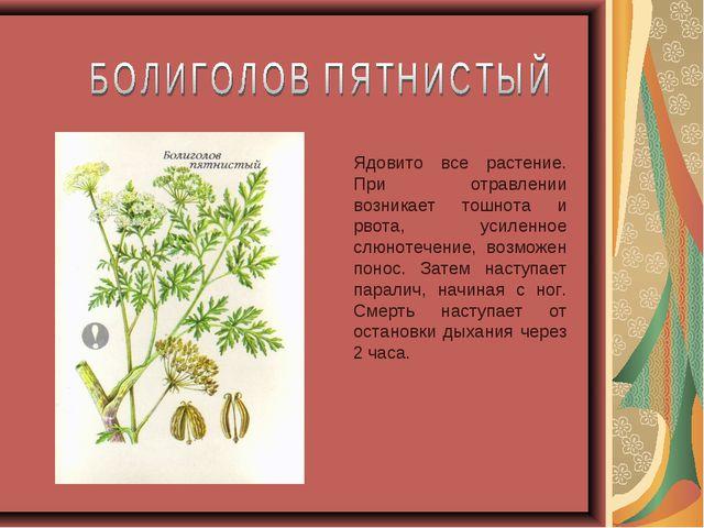Ядовито все растение. При отравлении возникает тошнота и рвота, усиленное слю...