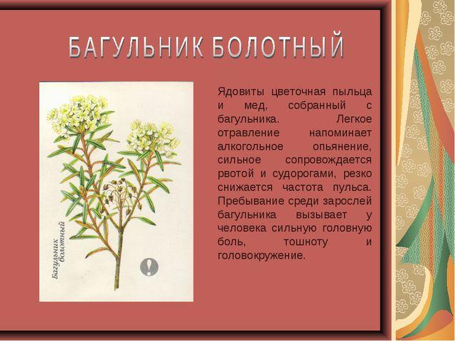 Ядовиты цветочная пыльца и мед, собранный с багульника. Легкое отравление нап...