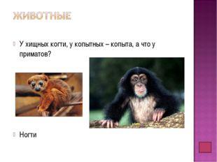У хищных когти, у копытных – копыта, а что у приматов? Ногти