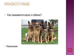 Как называется наука о собаках? Кинология