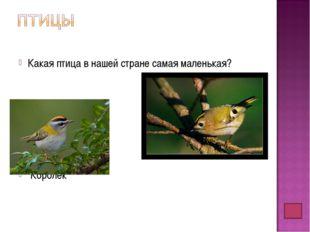 Какая птица в нашей стране самая маленькая? Королек