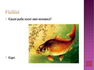 Какая рыба носит имя человека? Карп
