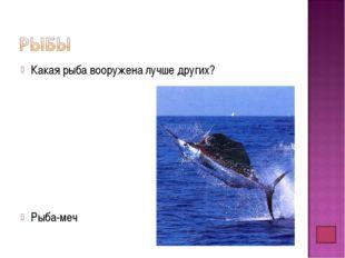 Какая рыба вооружена лучше других? Рыба-меч