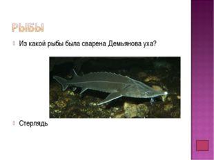 Из какой рыбы была сварена Демьянова уха? Стерлядь
