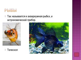 Так называется и аквариумная рыбка ,и астрономический прибор. Телескоп