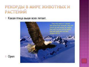 Какая птица выше всех летает. Орел