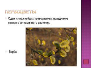 Один из важнейших православных праздников связан с ветками этого растения. Ве