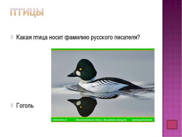 Какая птица носит фамилию русского писателя? Гоголь