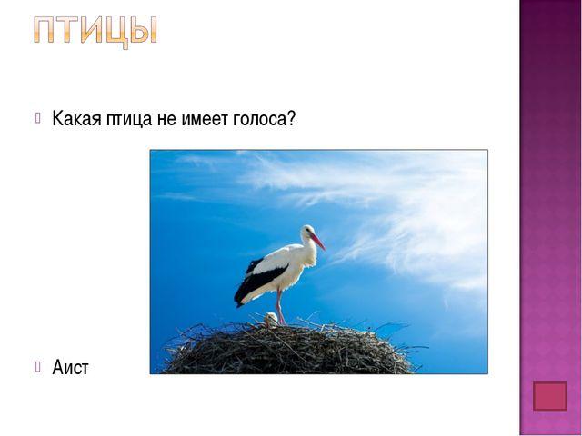Какая птица не имеет голоса? Аист