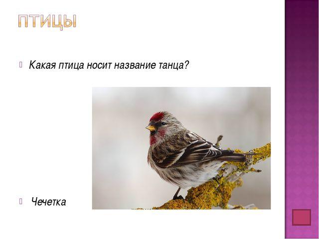 Какая птица носит название танца? Чечетка