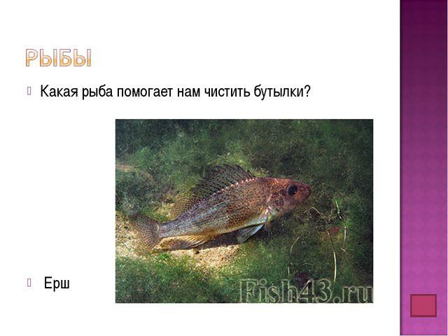 Какая рыба помогает нам чистить бутылки? Ерш