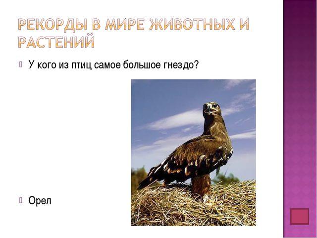 У кого из птиц самое большое гнездо? Орел