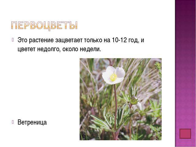 Это растение зацветает только на 10-12 год, и цветет недолго, около недели. В...