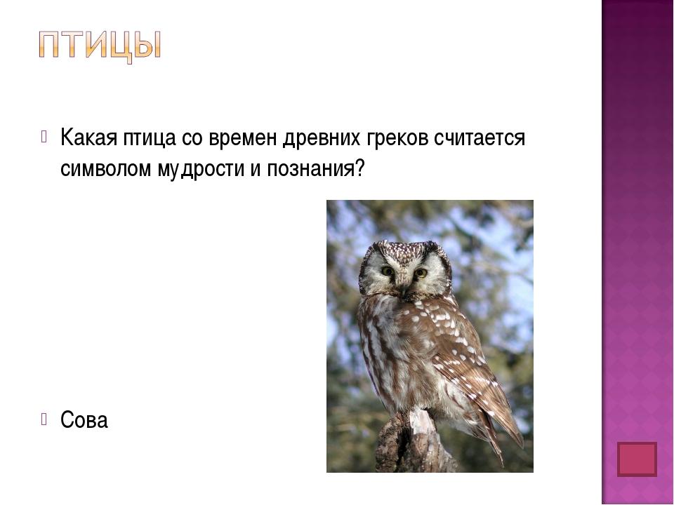 Какая птица со времен древних греков считается символом мудрости и познания?...