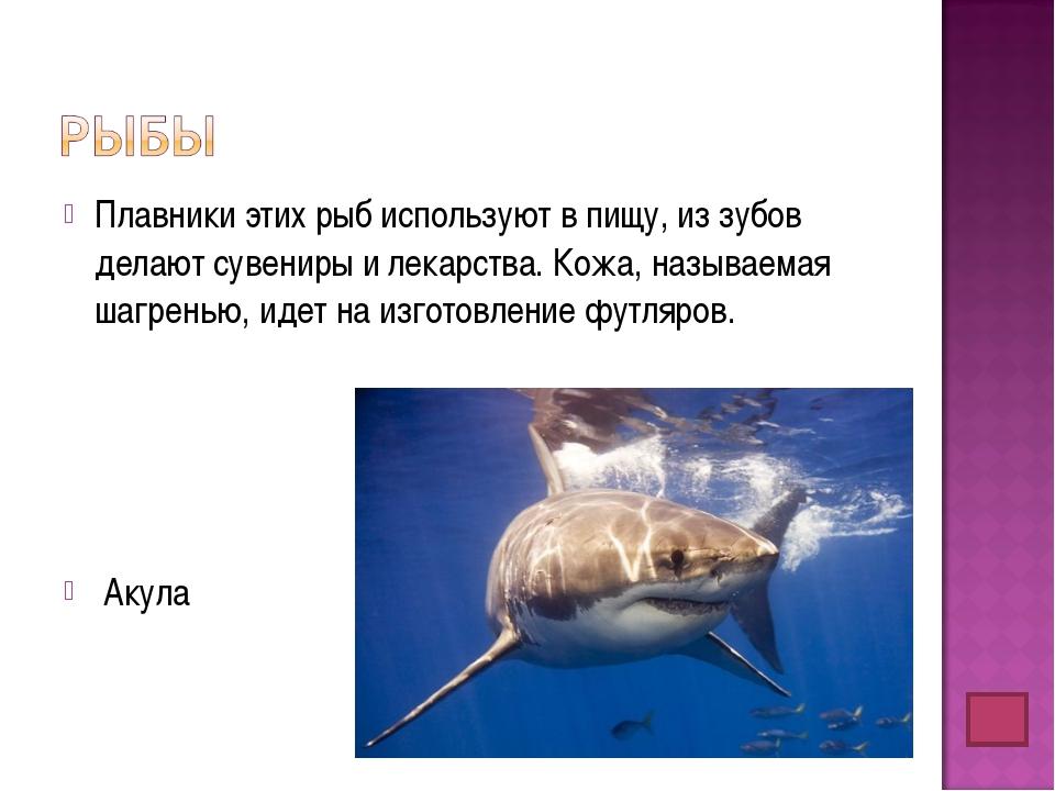 Плавники этих рыб используют в пищу, из зубов делают сувениры и лекарства. Ко...