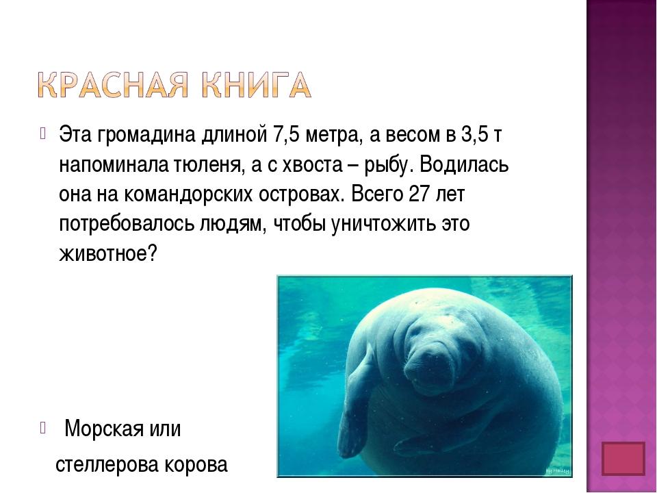 Эта громадина длиной 7,5 метра, а весом в 3,5 т напоминала тюленя, а с хвоста...