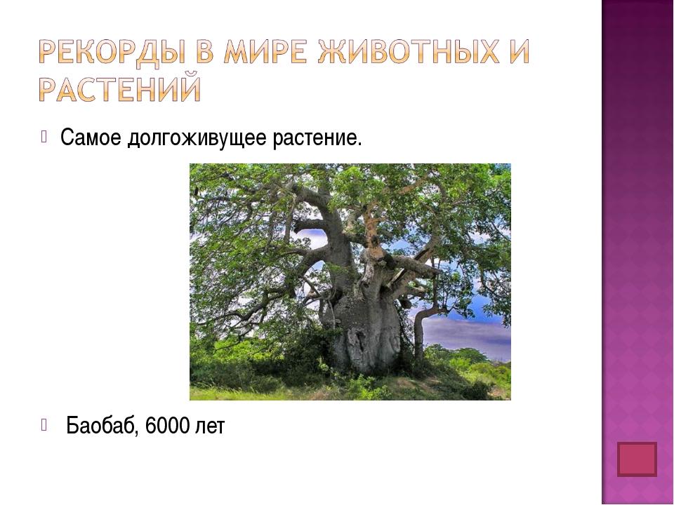 Самое долгоживущее растение. Баобаб, 6000 лет