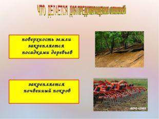 поверхность земли закрепляется посадками деревьев закрепляется почвенный пок
