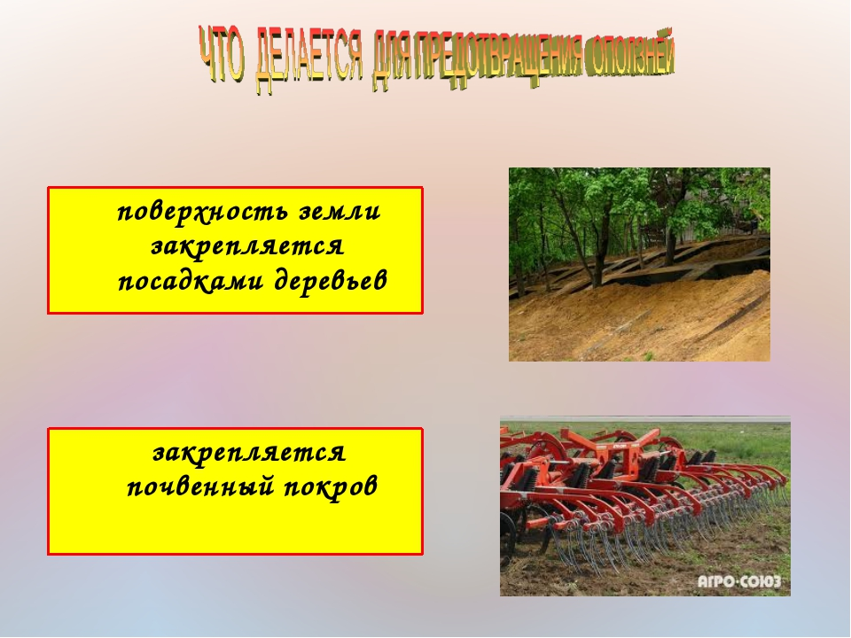 поверхность земли закрепляется посадками деревьев закрепляется почвенный пок...