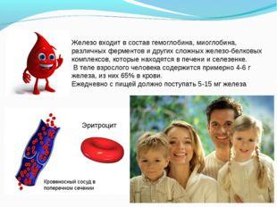 Железо входит в состав гемоглобина, миоглобина, различных ферментов и других