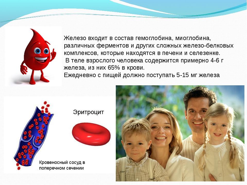 Железо входит в состав гемоглобина, миоглобина, различных ферментов и других...