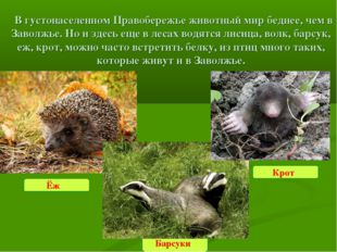 В густонаселенном Правобережье животный мир беднее, чем в Заволжье. Но и зд