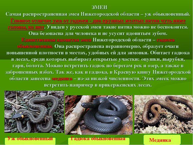 Медянка  ЗМЕИ Самая распространенная змея Нижегородской области –уж обыкнов...