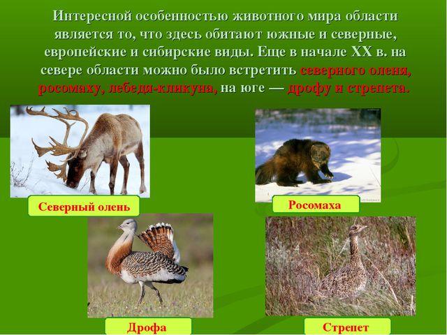 Интересной особенностью животного мира области является то, что здесь обитают...